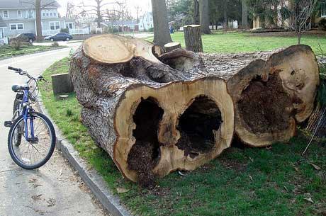 tree-bike.jpg