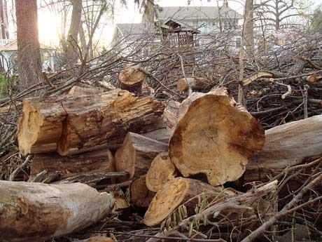 tree-pile.jpg