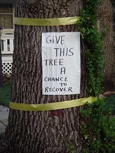 tree-sign.jpg