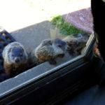 groundhog-12